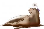 En savoir plus sur les éléphants de mer suivis en 2009