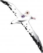 En savoir plus sur les albatros suivis en 2009