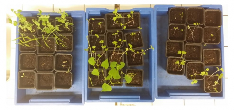 Tests de germinations diverses